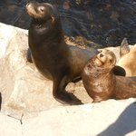 Sea Lions - photo from pier short walk from Monterey Plaza