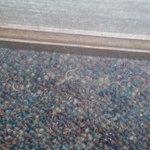 nail clippings