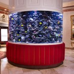 The Kimberly beautiful lobby fish tank