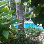 бассейн окружен тропической зеленью