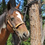 Rebel - my horse