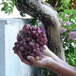 un bel grappolo d'uva