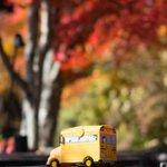 紅葉の季節は施設全体で色づいた木々を楽しめる