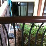 Vue du balcon de l'accueil