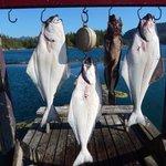 Three 40+ halibut