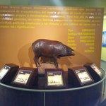 Distintas razas de cerdo iberico
