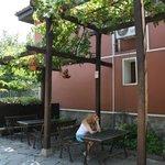 Виноград в саду церкви Св.Константина и Елены