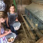 Collecting eggs, and boy were they yummy!