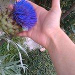 цветок-гигант