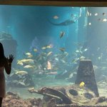 One of the humongous aquariums