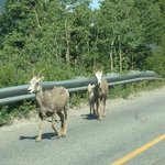 Wildlife spotted on drive to lake.