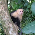 Monkey Poser