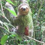 Sloth Up Close!