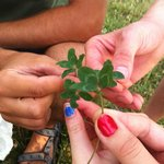 Four leaf clovers we found on the trip