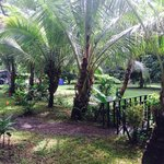 Casa Verde- Surrounded by Palm Trees