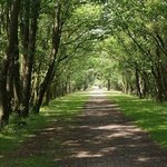 Path on the bike ride between Burley and Brockenhurst