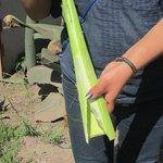 Proceso artesanal de el agave, papel y tequila .