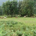 Parc des Lamas