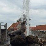 steller zeeleeuw
