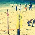 Save the SEA TURTLES area!