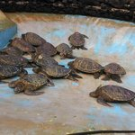 Pile of Turtles in Sea Life Park Mini-Tour: This part wasn't worth the time