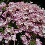 Las bellas flores del jardín que adorna el Castillo de los Moros