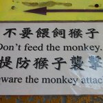 Don't feed monkeys!
