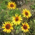 Flowers - Sunset Magazine, Menlo Park, Ca