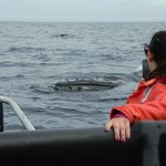 Humpbacks checking out our boat