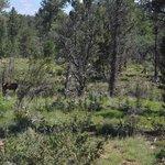 First elk sighting