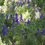 Community flower garden