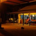 Stacja benzynowa ze sklepem i dingo :)