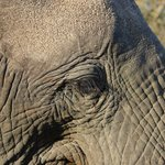 Elephant - real close!