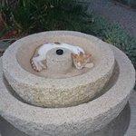 Просто кошка. В фонтане.