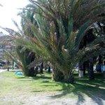 Playa extensa,  con varias zonas de palmeras con cesped y zona de arena