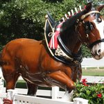 Clydesdale Statue