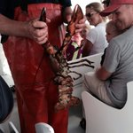 Huge 6-7 pound lobster caught!
