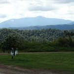 Mount Bartle Frere from Mungalli Creek Dairy