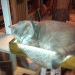 Знаменитый кот Мари-Ванны
