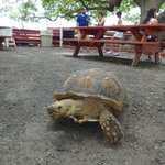 A tortoise in the petting zoo.