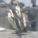 ペンギンさんのもぐもぐタイム