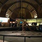 Макет  динозавра в музее Юрского периода