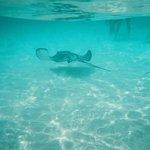 Underwater view of the stingrays