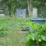 Mr McGregor's garden complete with Peter Rabbit!