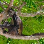 Monkey at the Zen Pool