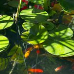 Jardin - bassin zen