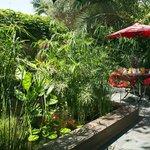Jardin zen et ombragé