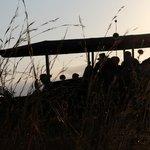 Amazing Safari Experience