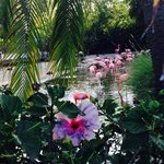 flamingis & hibiscus