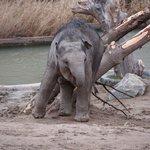 Nuser elefantunge